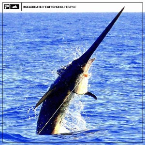 Swordfish Records - Fishing on the Booby Trap for Daytime Swords