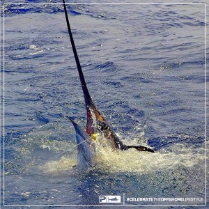 Texas Record Swordfish - Daytime Swordfish Record