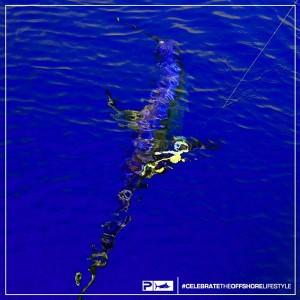 daytime swordfishing records