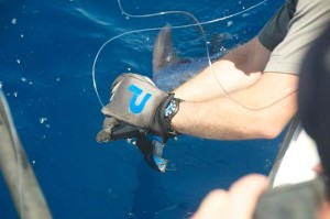 How to Catch Daytime Swordfish