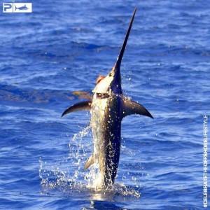Jumping Daytime Swordfish - Pelagic