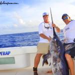 Daytime Swordfish picture-images of daytime swordfish