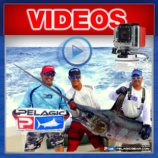 Record daytime swordfish in Texas - Texas State Record Swordfish