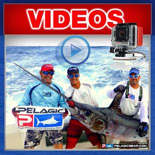 Record daytime swordfish in Texas - Texas State Record Swordfish