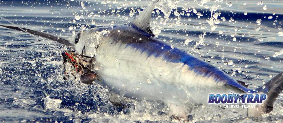 Daytime Swordfishing Photos