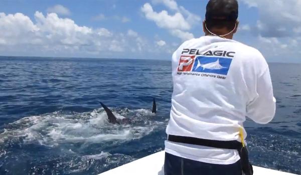 texas daytime swordfish record - daytime swordfishing charters